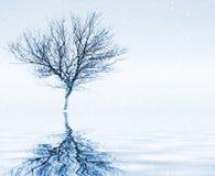 мирная зима пейзажа Стоковое Фото