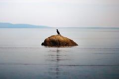 Мирная птица стоя на утесе водой в туманном утре Стоковые Фотографии RF