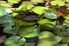 мирная сада nenuphar Стоковое Фото