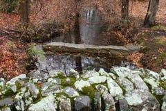 Мирное река спрятанное в древесинах стоковые фотографии rf