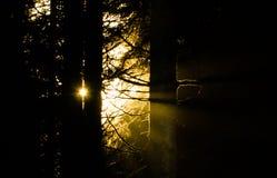 Мирное солнце утра Стоковая Фотография
