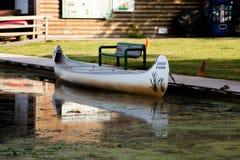 Мирное сценарное болото с зеленой травой и пешеходным Судом стоковые фотографии rf