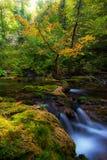 Мирно пропуская листво потока и осени Стоковое Изображение