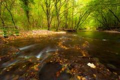 Мирно пропуская листво потока и осени Стоковые Фотографии RF