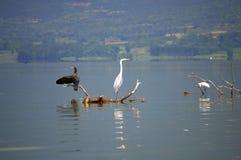 Мирные озеро и птицы Стоковая Фотография RF