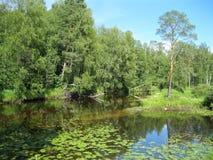 Мирный взгляд на реке леса Стоковая Фотография