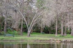 Мирный взгляд пруда Стоковые Изображения