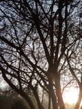 мирный восход солнца стоковые фото