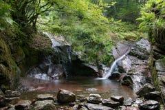 Мирный водопад в лесе Стоковые Изображения