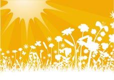 Мирный заход солнца Стоковые Фотографии RF