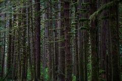 Мирный лес в олимпийском национальном парке стоковое изображение rf