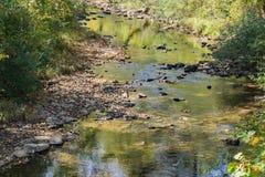 Мирный поток форели Стоковая Фотография RF
