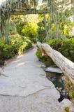 Мирный путь в японском парке Стоковое Изображение