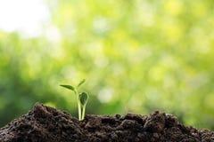 Мировоззренческая доктрина спасения окружающей среды экологичности земли Csr Стоковые Изображения