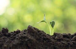 Мировоззренческая доктрина спасения окружающей среды экологичности земли Csr Стоковое Фото