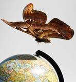 мир бабочки Стоковое Изображение