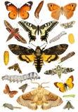 Мир бабочки Стоковая Фотография RF