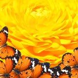 Мир волшебства бабочек Стоковое Изображение
