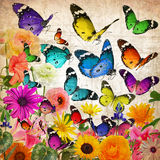 Мир волшебства бабочек Стоковые Фото
