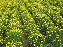 Мир вполне красивых маленьких желтых цветков стоковое изображение rf