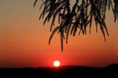 Мир в природе Стоковые Фото
