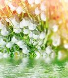 мир глуши долины природы лилии русский Стоковые Изображения