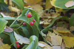 мир глуши долины природы лилии русский стоковое изображение