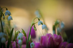 мир глуши долины природы лилии русский Стоковые Изображения RF