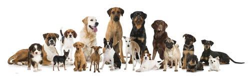 мир глуши природы группы собак русский стоковое изображение