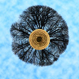 Мир дерева Стоковые Фотографии RF
