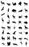Мир животного Стоковая Фотография RF