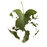 мир карты листьев стоковое фото rf