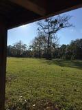 Мир коров деревьев времени фермы Стоковые Изображения RF