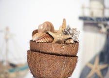 Мир моря в кокосе Стоковое фото RF