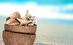 Мир моря в кокосе Стоковая Фотография RF