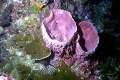 мир моря 16 andaman кораллов удивительно Стоковые Изображения