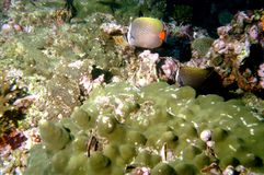 мир моря 17 andaman кораллов удивительно Стоковое Изображение RF