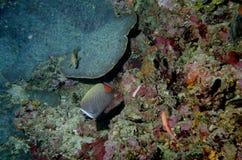 мир моря 2 andaman кораллов удивительно Стоковая Фотография