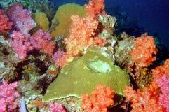 мир моря 21 andaman коралла удивительно Стоковая Фотография RF