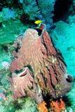 мир моря 22 andaman кораллов удивительно Стоковое Изображение