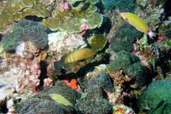 мир моря 26 andaman кораллов удивительно Стоковое Изображение