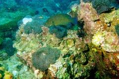 мир моря 27 andaman кораллов удивительно Стоковые Изображения