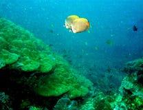 мир моря 28 andaman кораллов удивительно Стоковые Изображения RF