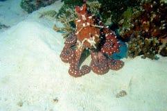 мир моря 30 andaman кораллов удивительно Стоковая Фотография