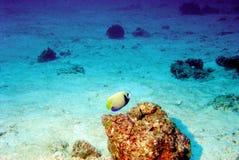 мир моря 31 andaman коралла удивительно Стоковая Фотография