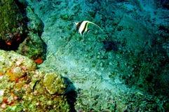 мир моря 32 andaman кораллов удивительно Стоковая Фотография RF