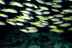 мир моря 33 andaman кораллов удивительно Стоковое фото RF