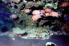 мир моря 36 andaman кораллов удивительно Стоковые Фотографии RF