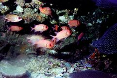 мир моря 37 andaman кораллов удивительно Стоковые Изображения