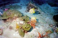 мир моря 38 andaman кораллов удивительно Стоковые Изображения